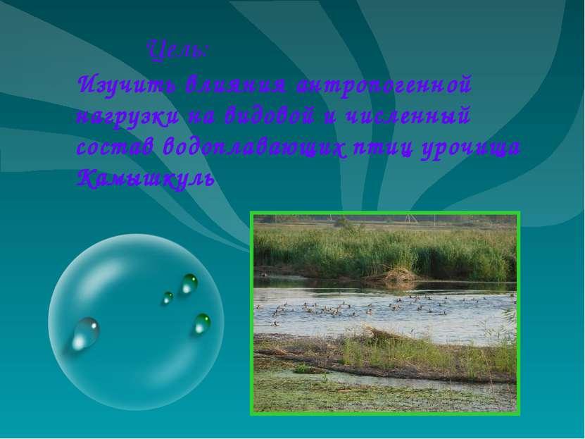 Изучить влияния антропогенной нагрузки на видовой и численный состав водоплав...