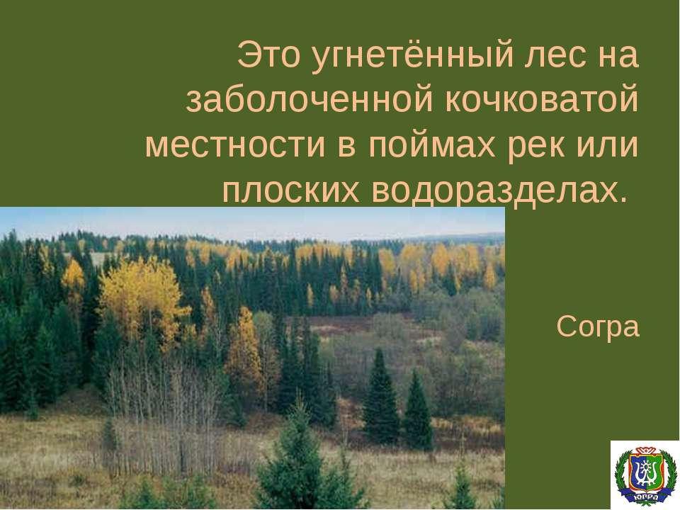 Это угнетённый лес на заболоченной кочковатой местности в поймах рек или плос...