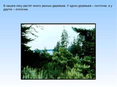 В нашем лесу растёт много разных деревьев. У одних деревьев – листочки, а у д...