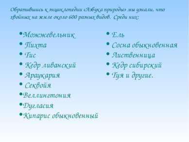 Можжевельник Пихта Тис Кедр ливанский Араукария Секвойя Веллингтония Дугласия...