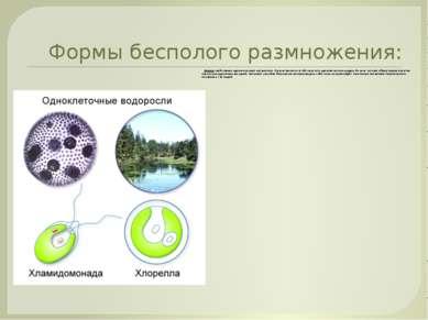 Формы бесполого размножения: Деление свойственно одноклеточным организмам. Ос...