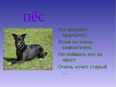 пёс Кот мяукает, мурлычет, Всем он очень симпатичен, Но поймать его за хвост ...