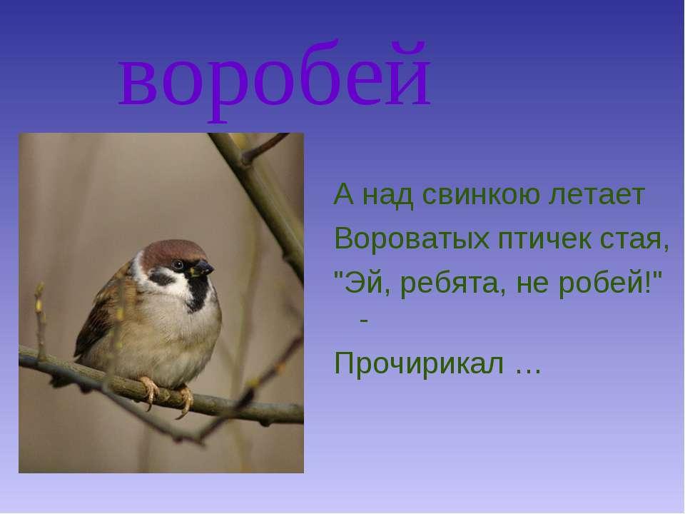"""воробей А над свинкою летает Вороватых птичек стая, """"Эй, ребята, не робей!"""" -..."""