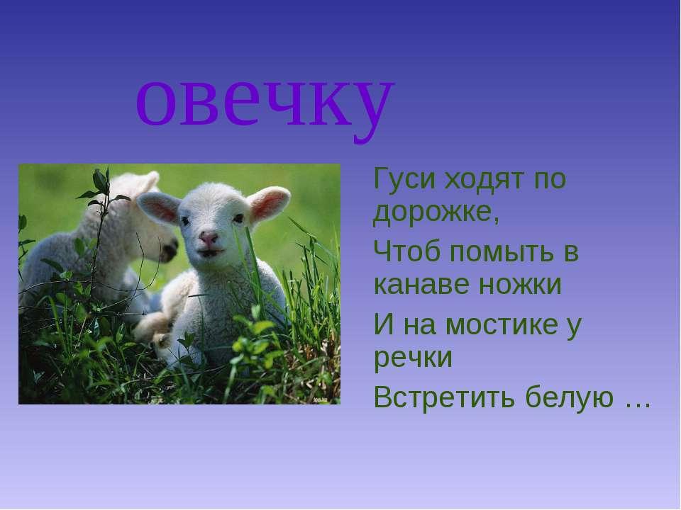 овечку Гуси ходят по дорожке, Чтоб помыть в канаве ножки И на мостике у речки...