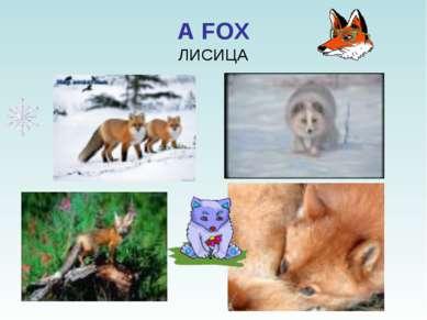 A FOX ЛИСИЦА