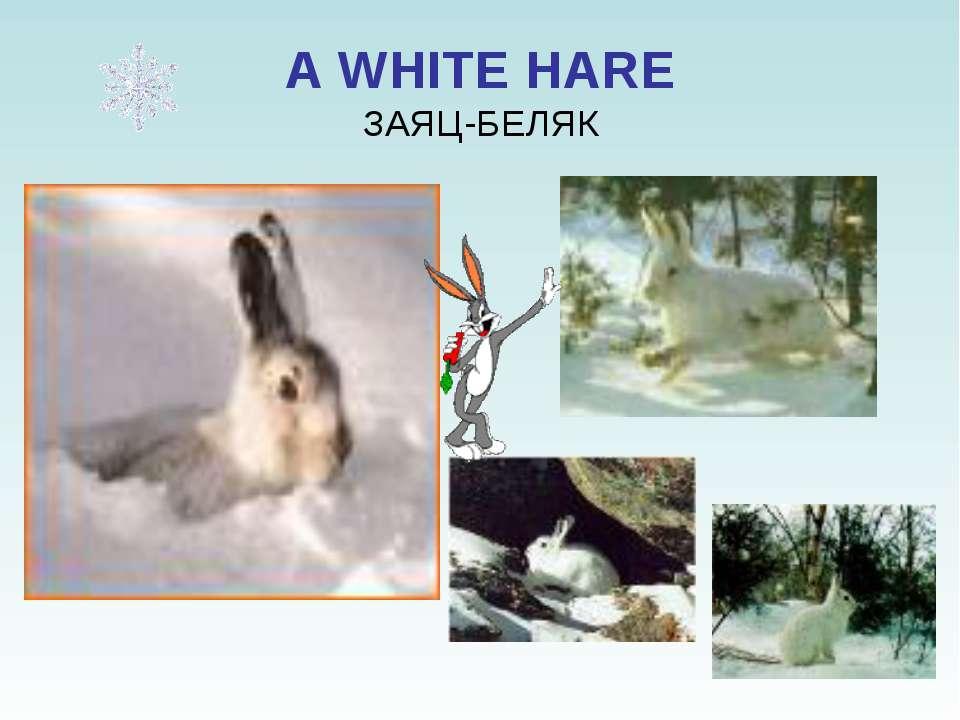 A WHITE HARE ЗАЯЦ-БЕЛЯК