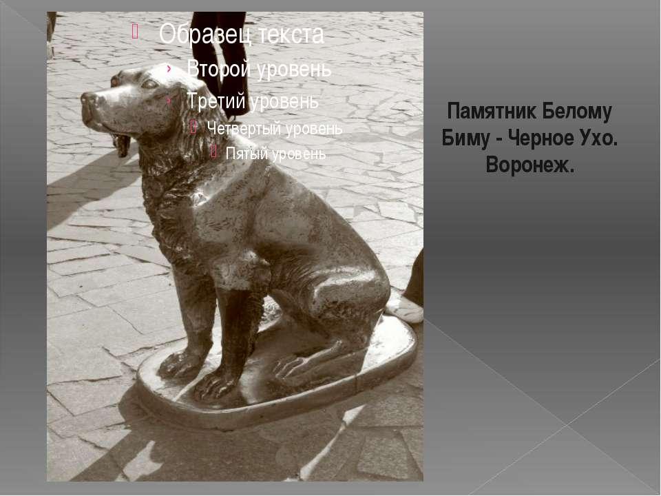 Памятник Белому Биму - Черное Ухо. Воронеж. Знаменитый герой воронежского пис...
