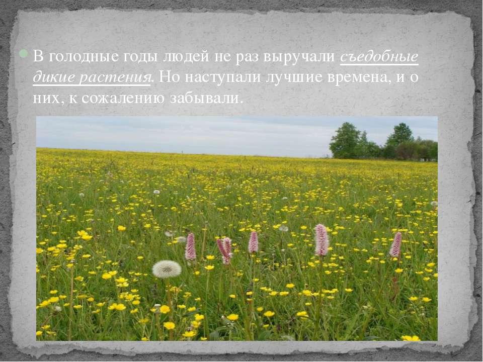 В голодные годы людей не раз выручали съедобные дикие растения. Но наступали ...