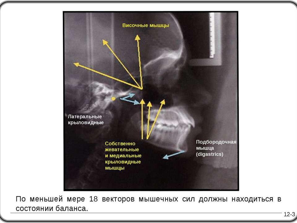 12-3 Подбородочная мышца (digastrics) По меньшей мере 18 векторов мышечных си...