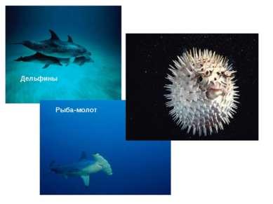 Дельфины Рыба-молот Рыба-шар