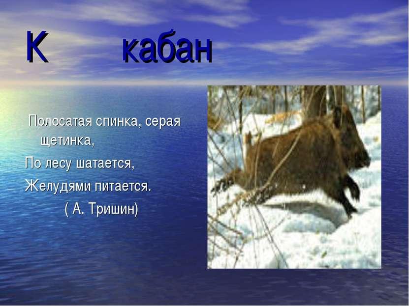 К кабан Полосатая спинка, серая щетинка, По лесу шатается, Желудями питается....