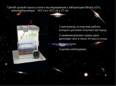 Третий урожай гороха усатого мы выращивали в лаборатории MicroLADA, имеющей р...
