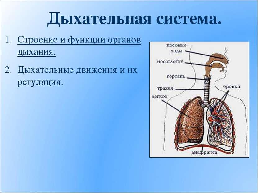 Дыхательная система. Строение и функции органов дыхания. Дыхательные движения...
