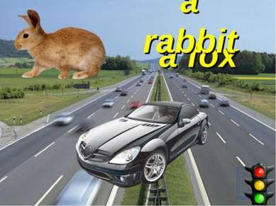 a fox a rabbit