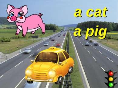 a pig a cat