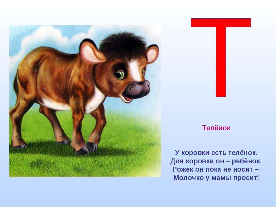 Телёнок У коровки есть телёнок. Для коровки он – ребёнок. Рожек он пока не но...