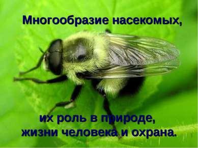 Многообразие насекомых, их роль в природе, жизни человека и охрана.