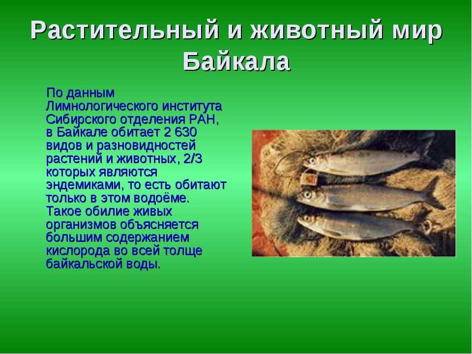 Растительный и животный мир Байкала По данным Лимнологического института Сиби...