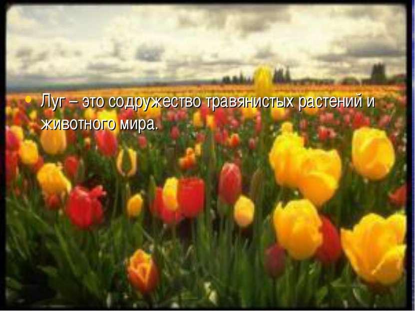 Луг – это содружество травянистых растений и животного мира.