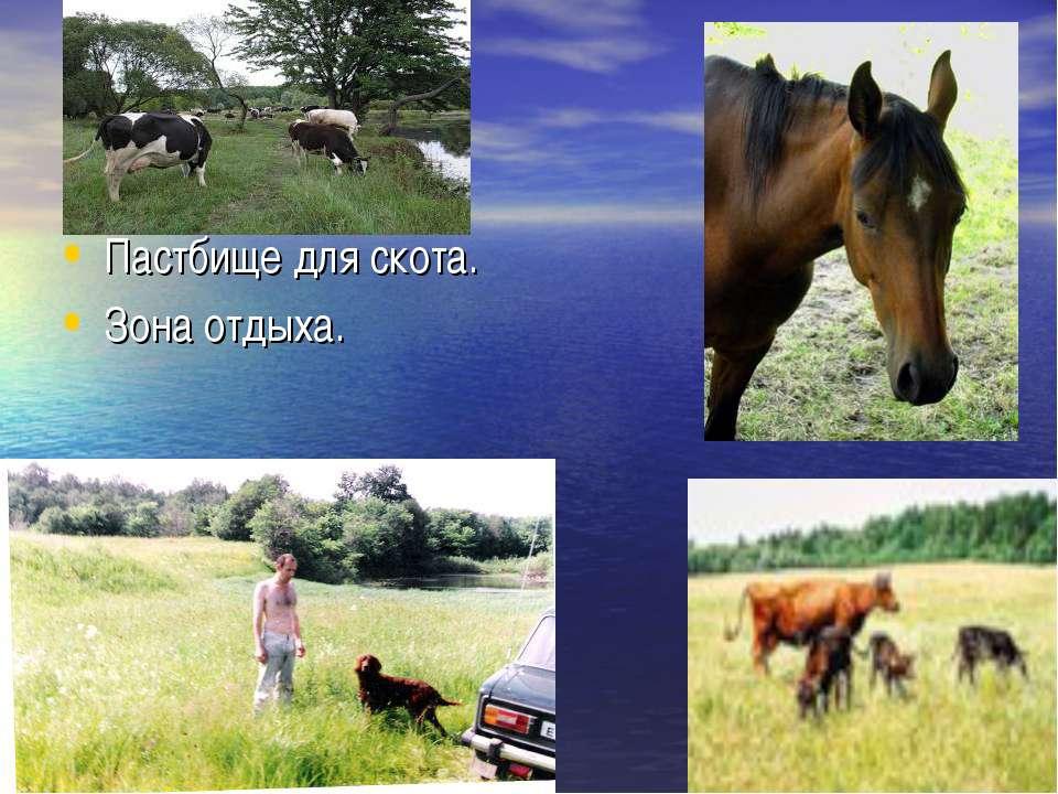 Пастбище для скота. Зона отдыха.