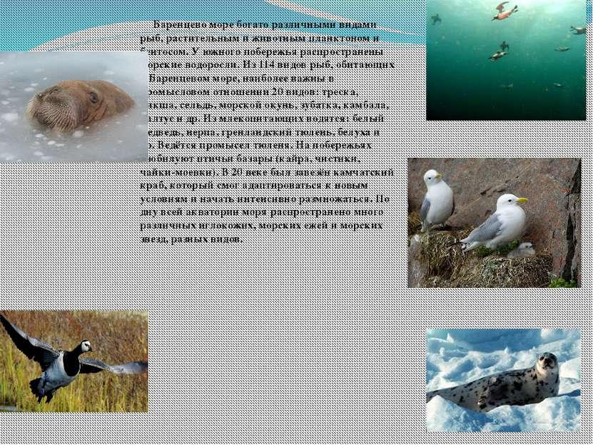 доклад на тему баренцево море 4 класс