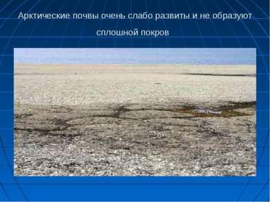Арктические почвы очень слабо развиты и не образуют сплошной покров