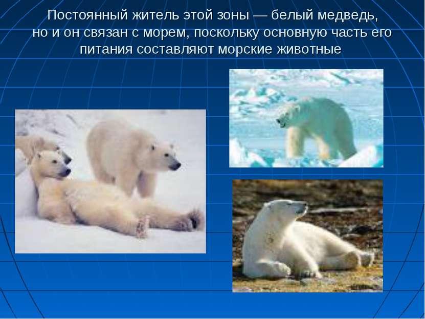 Постоянный житель этой зоны— белый медведь, ноионсвязан сморем, поскольк...