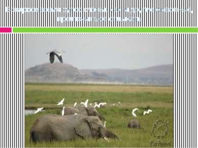 В жаркое время суток слоны, как и другие животные, предпочитают отдыхать