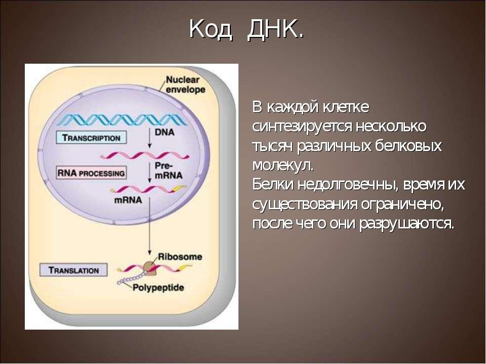 В каждой клетке синтезируется несколько тысяч различных белковых молекул. Бел...