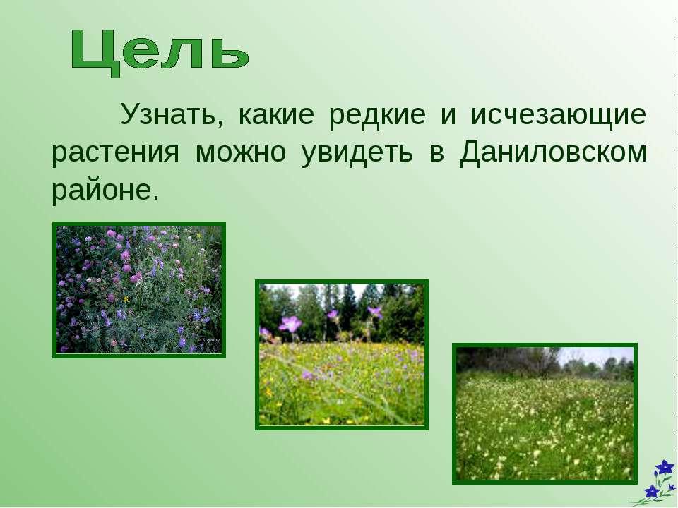 Узнать, какие редкие и исчезающие растения можно увидеть в Даниловском районе.