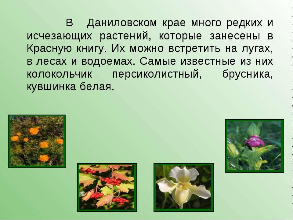 В Даниловском крае много редких и исчезающих растений, которые занесены в Кра...
