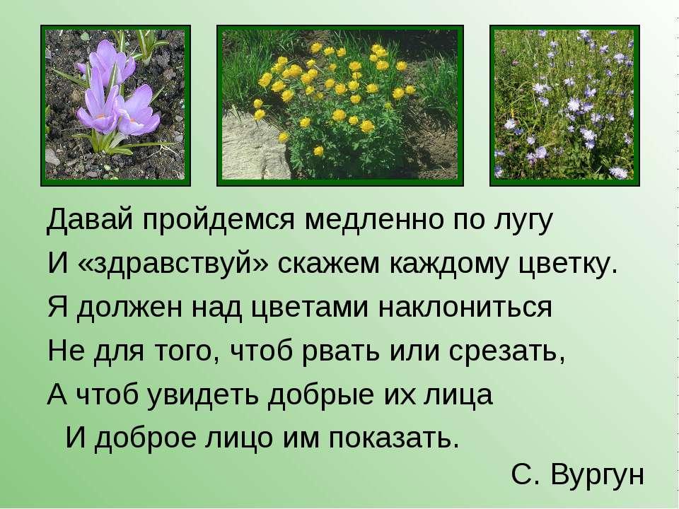 Давай пройдемся медленно по лугу И «здравствуй» скажем каждому цветку. Я долж...