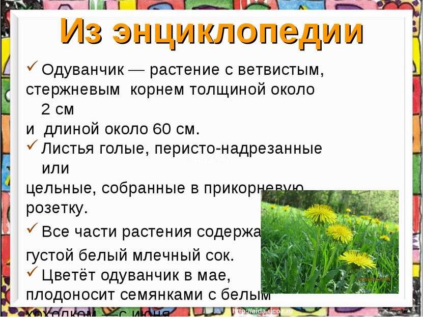 Из энциклопедии Одуванчик— растение с ветвистым, стержневым корнем толщиной ...