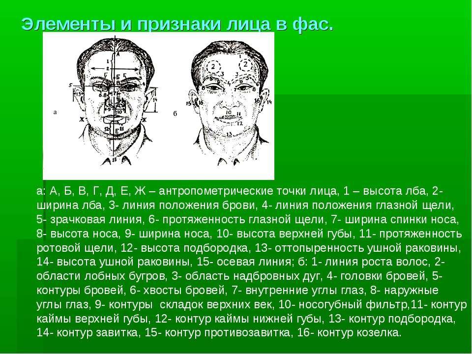 Элементы и признаки лица в фас. а: А, Б, В, Г, Д, Е, Ж – антропометрические т...