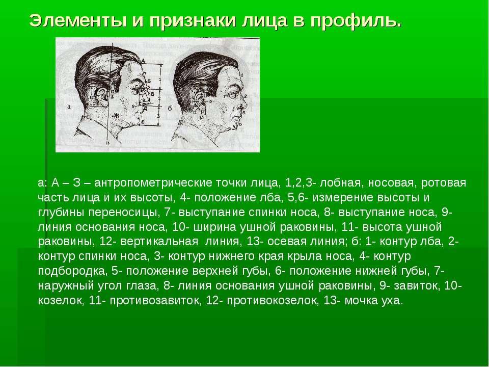 Элементы и признаки лица в профиль. а: А – З – антропометрические точки лица,...