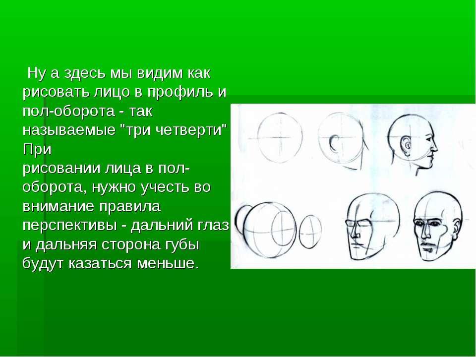 Ну а здесь мы видим как рисовать лицо в профиль и пол-оборота - так называемы...