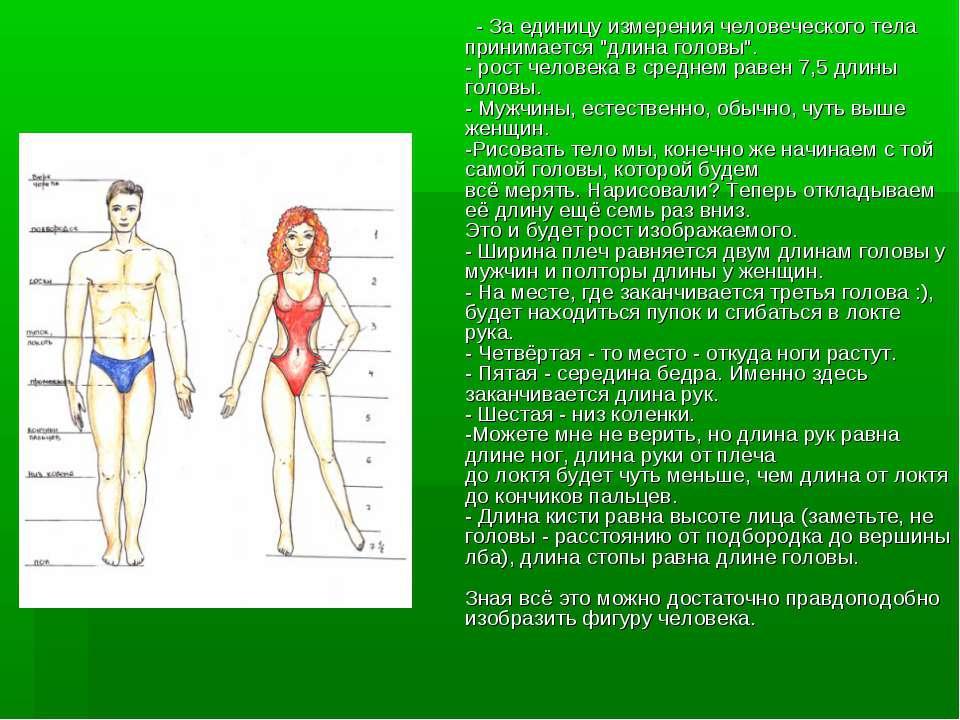 """- За единицу измерения человеческого тела принимается """"длина головы"""". - рост ..."""