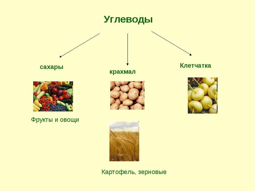 Углеводы сахары крахмал Клетчатка Фрукты и овощи Картофель, зерновые