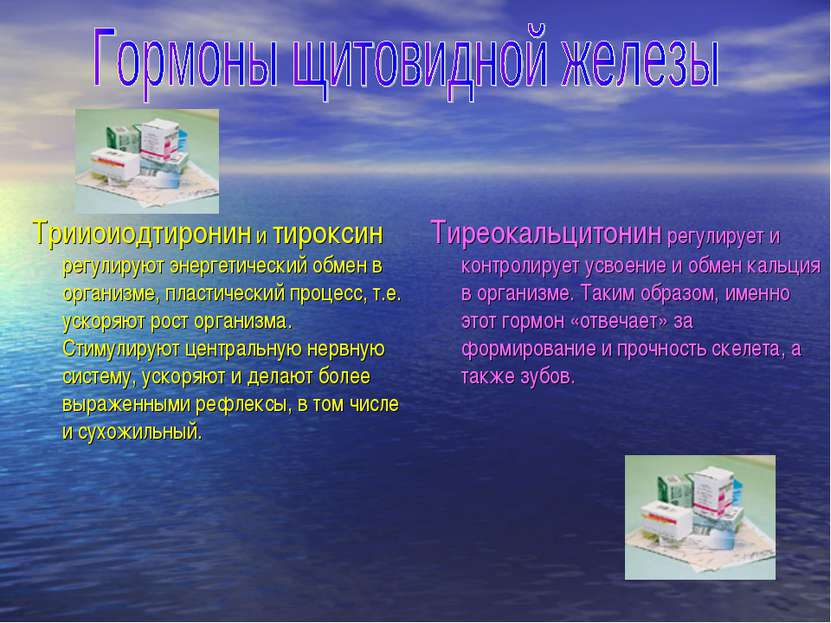 Трииоиодтиронин и тироксин регулируют энергетический обмен в организме, пласт...