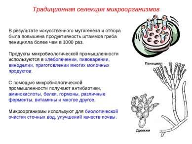 В результате искусственного мутагенеза и отбора была повышена продуктивность ...