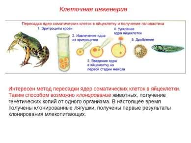 Интересен метод пересадки ядер соматических клеток в яйцеклетки. Таким способ...