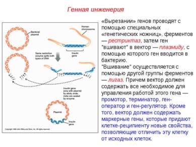 «Вырезании» генов проводят с помощью специальных «генетических ножниц», ферме...