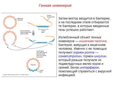 Затем вектор вводится в бактерию, и на последнем этапе отбираются те бактерии...