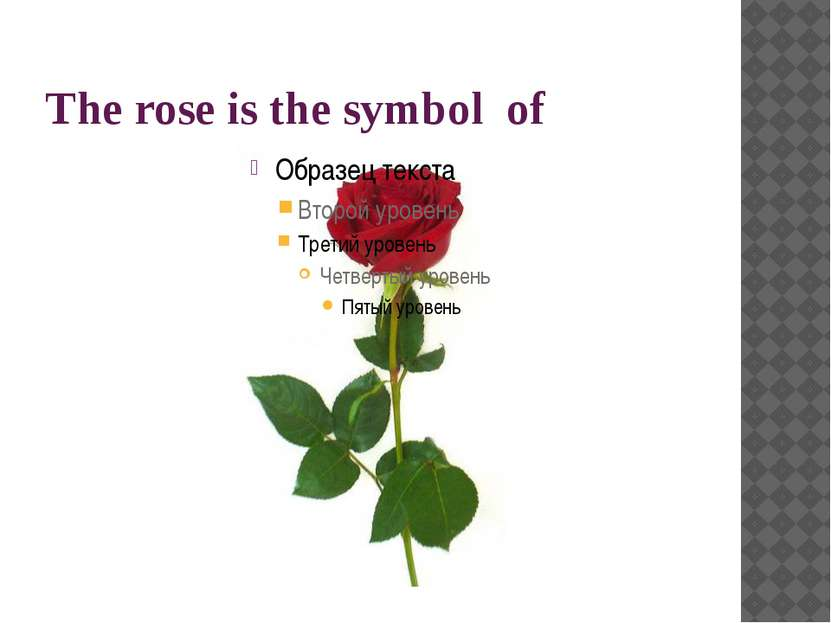 The rose is the symbol of
