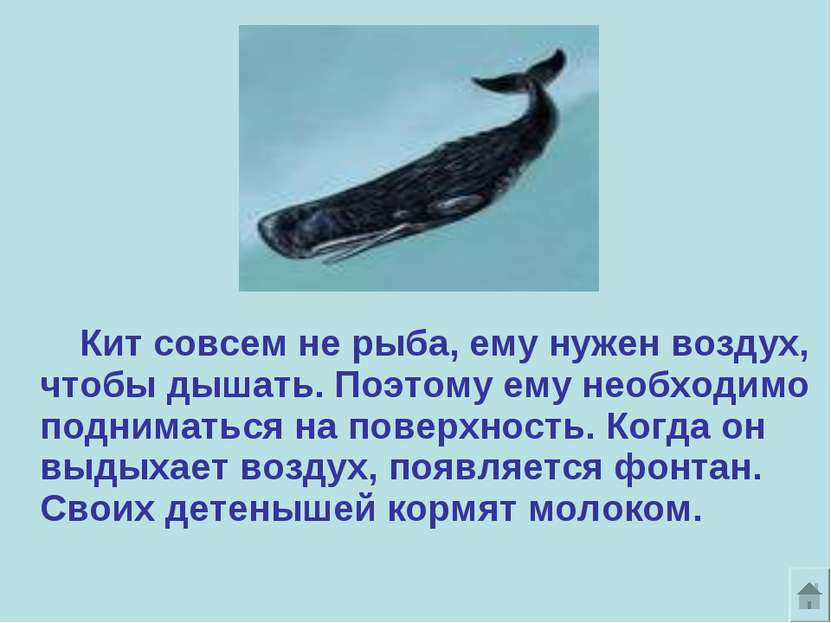 Кит совсем не рыба, ему нужен воздух, чтобы дышать. Поэтому ему необходимо по...