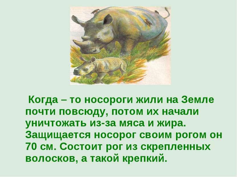 Когда – то носороги жили на Земле почти повсюду, потом их начали уничтожать и...