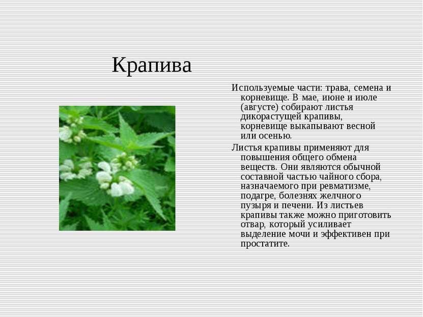 Крапива Используемые части: трава, семена и корневище. В мае, июне и июле (ав...