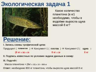Какое количество планктона (в кг) необходимо, чтобы в водоёме выросла щука м...