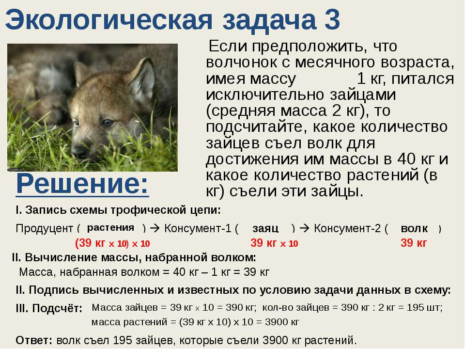 Экологическая задача 3 Если предположить, что волчонок с месячного возраста, ...