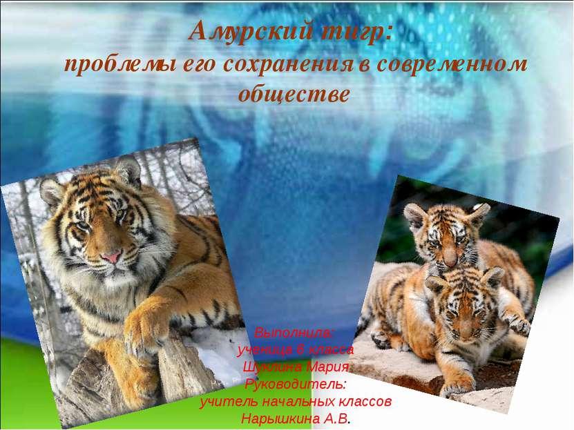 Амурский тигр: проблемы его сохранения в современном обществе Выполнила: учен...